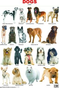 Dog Breed Chart